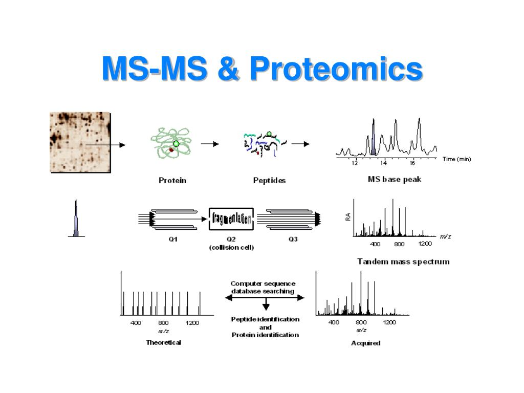 MS-MS & Proteomics
