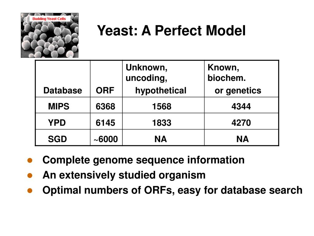 Yeast: A Perfect Model