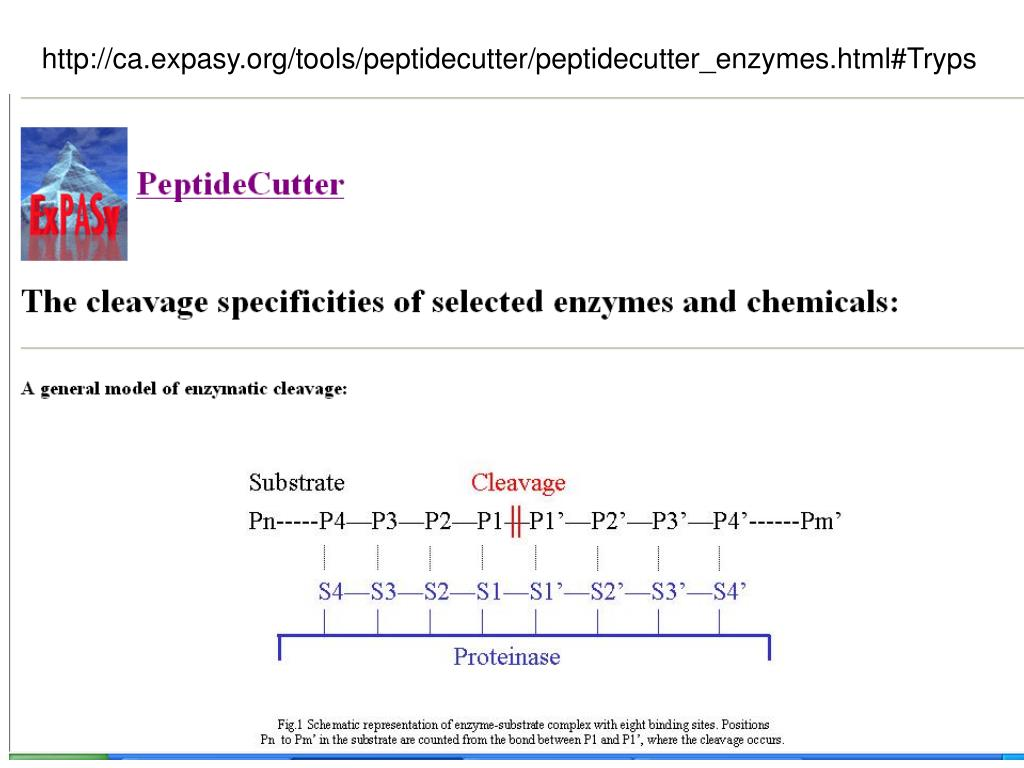 http://ca.expasy.org/tools/peptidecutter/peptidecutter_enzymes.html#Tryps