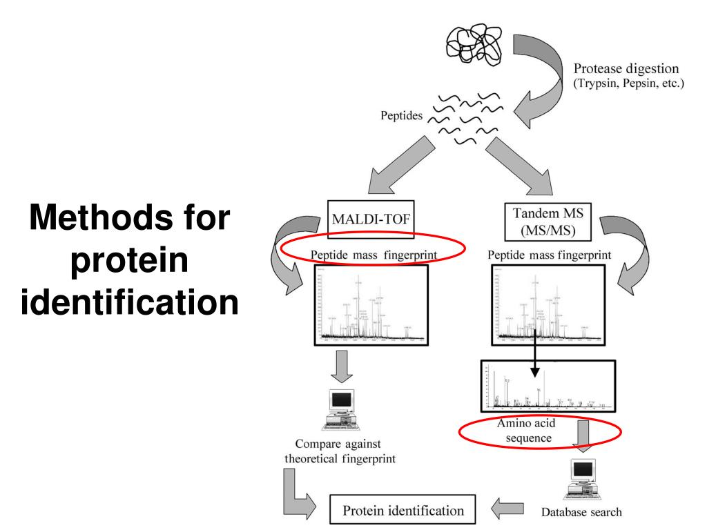 Methods for protein identification