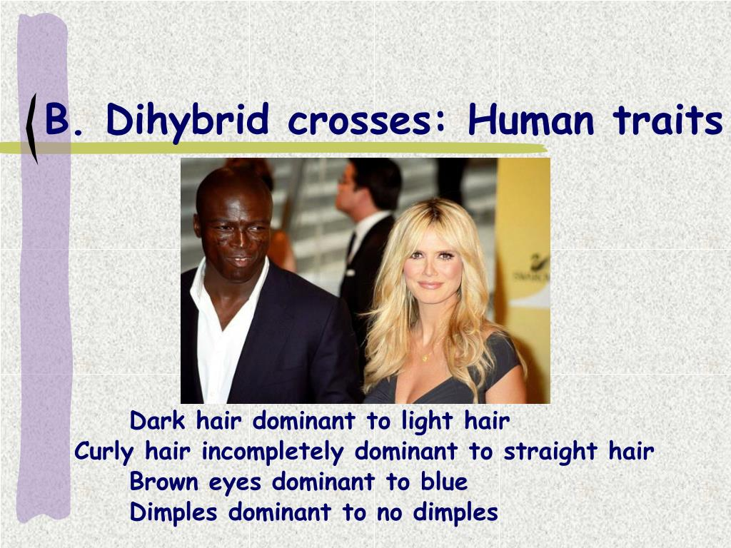 B. Dihybrid crosses: Human traits