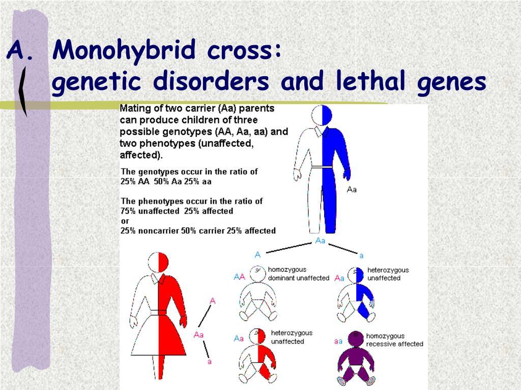 Monohybrid cross: