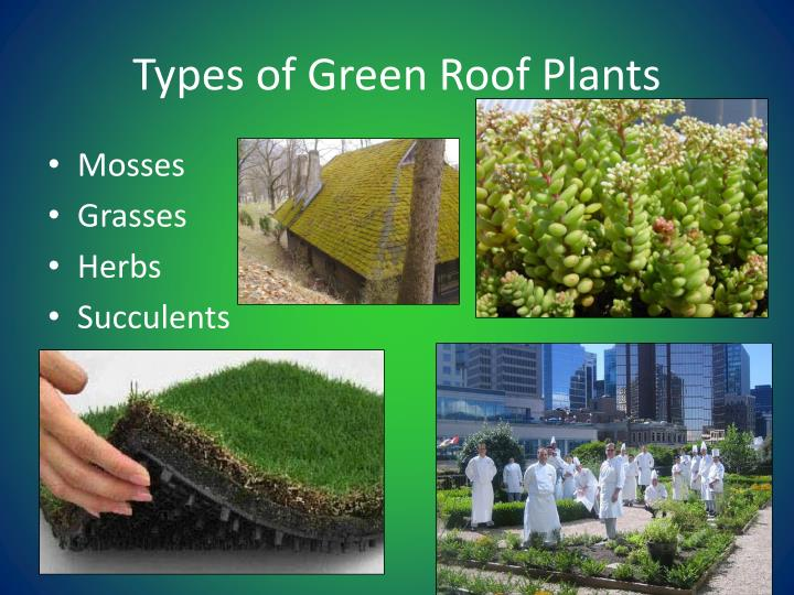 Ppt Installation Of A Green Roof The Use Of A Literature