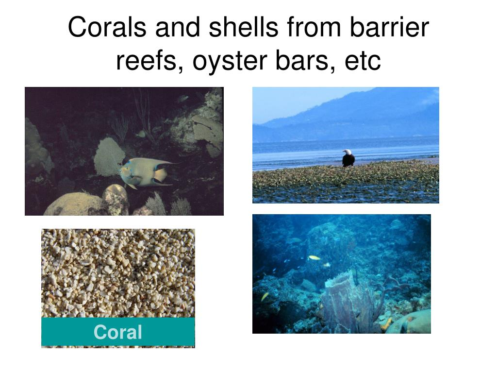 Corals and shells from barrier reefs, oyster bars, etc