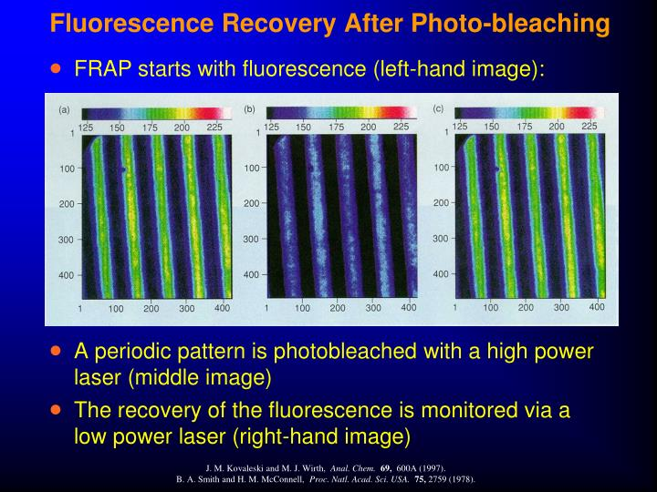 Fluorescence Recovery After Photo-bleaching