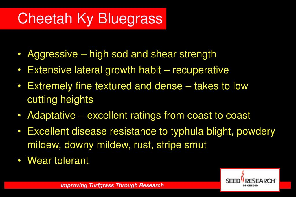 Aggressive – high sod and shear strength