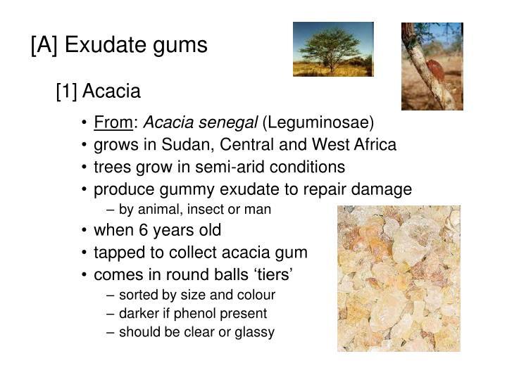 [A] Exudate gums