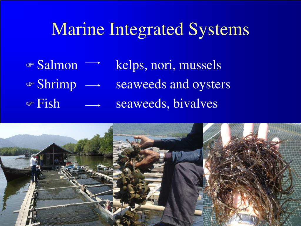 Marine Integrated Systems