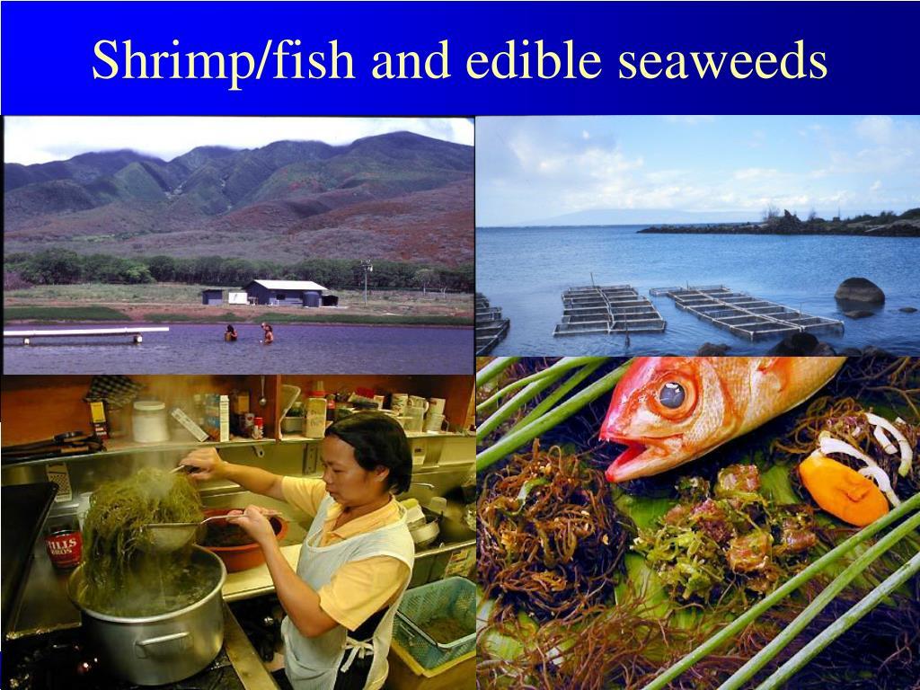 Shrimp/fish and edible seaweeds