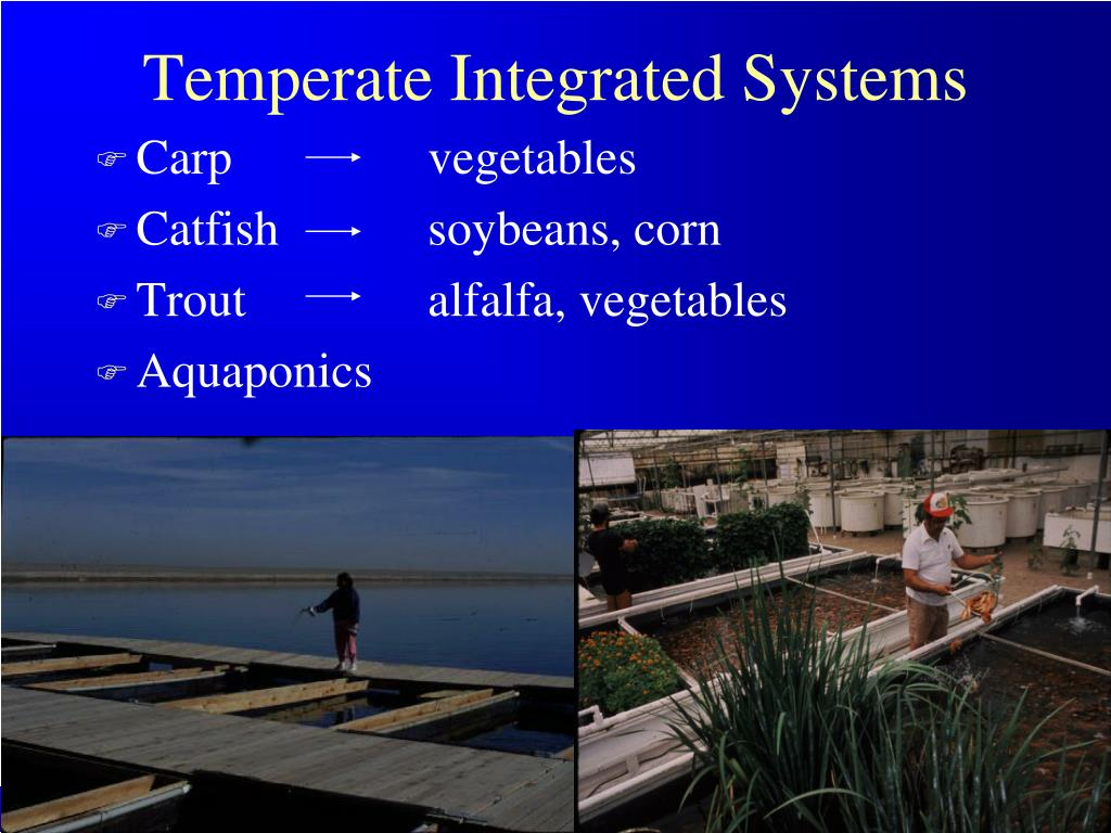 Temperate Integrated Systems