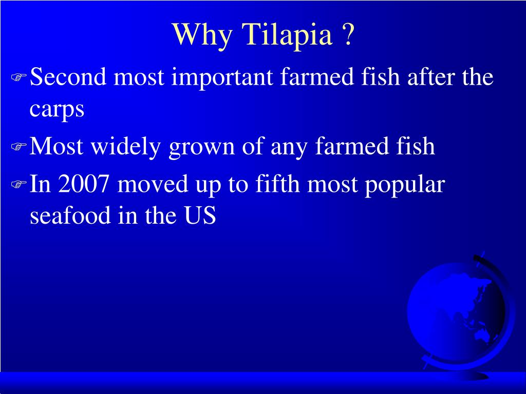 Why Tilapia ?