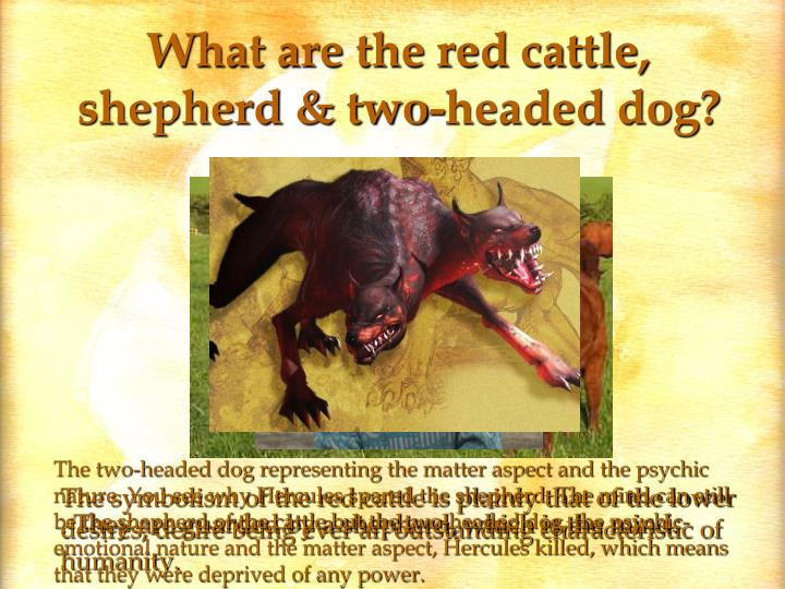 What are the red cattle, shepherd & two-headed dog?