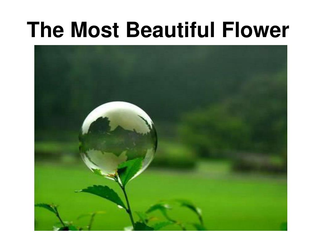 The Most Beautiful Flower