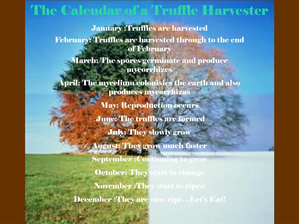 The Calendar of a Truffle Harvester