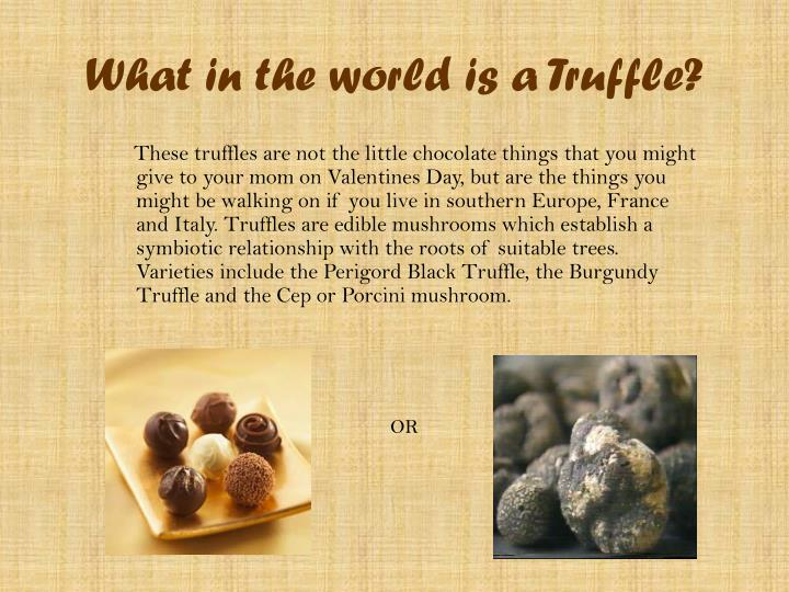 What in the world is a truffle