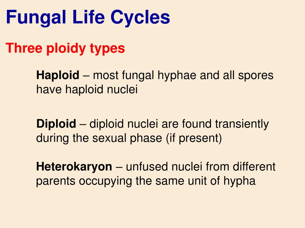 Fungal Life Cycles