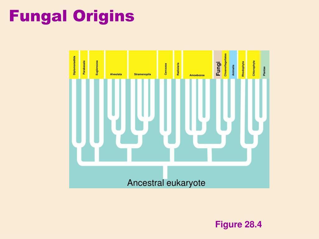 Fungal Origins