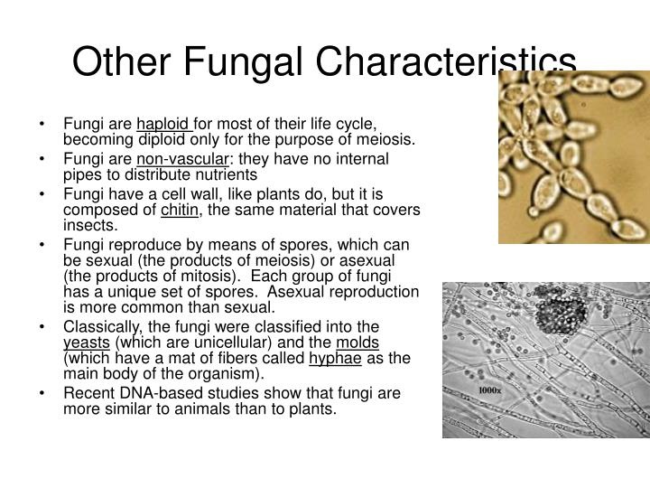 Other fungal characteristics
