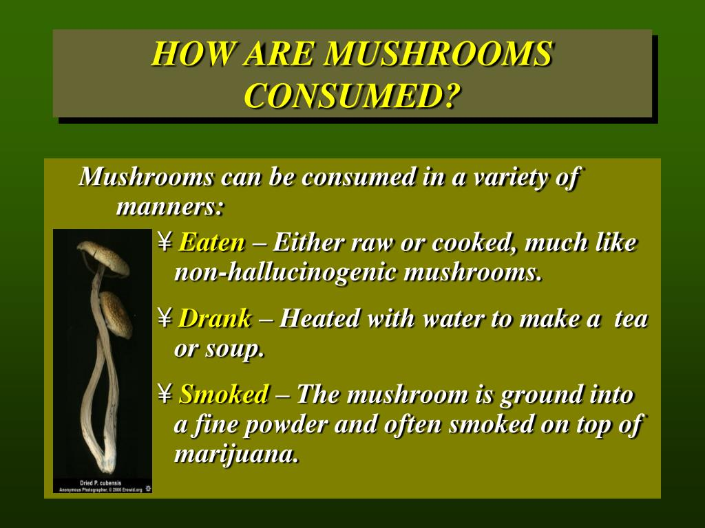 HOW ARE MUSHROOMS