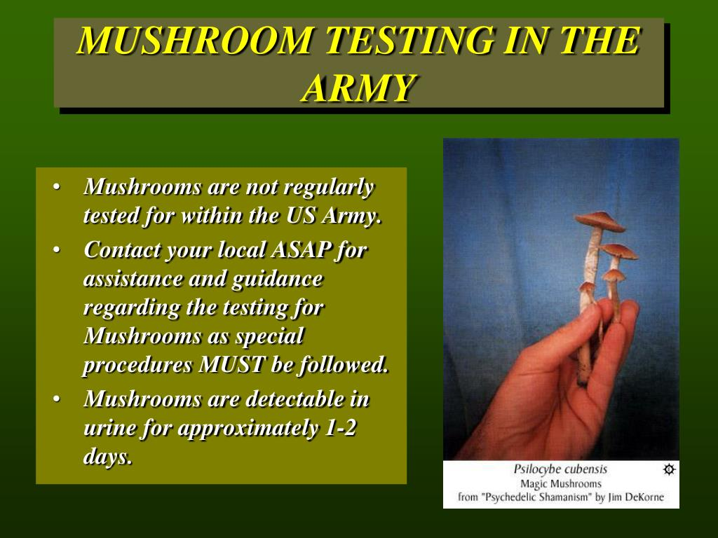 MUSHROOM TESTING IN THE ARMY