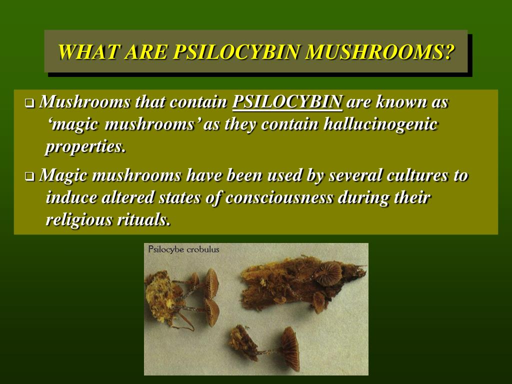 Mushrooms that contain
