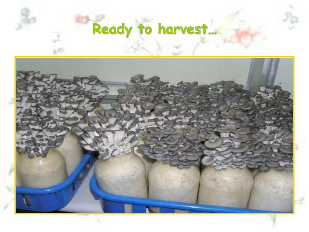 Ready to harvest…