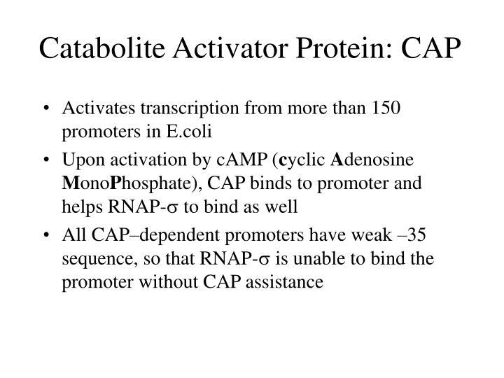 Catabolite Activator Protein: CAP