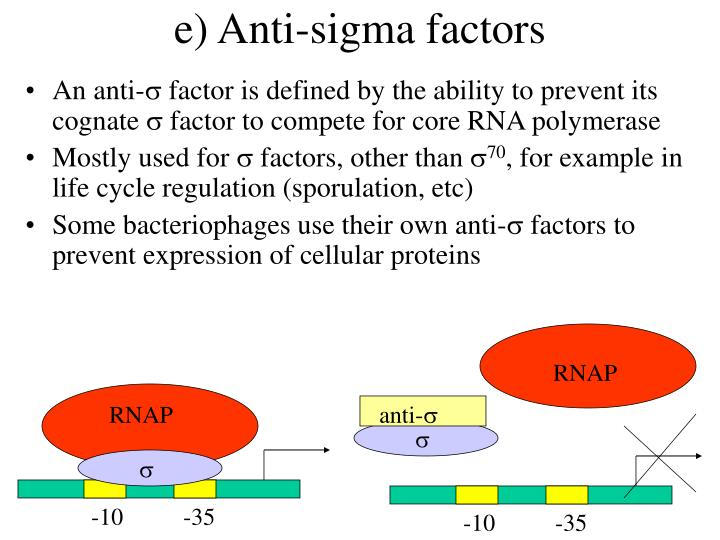 e) Anti-sigma factors