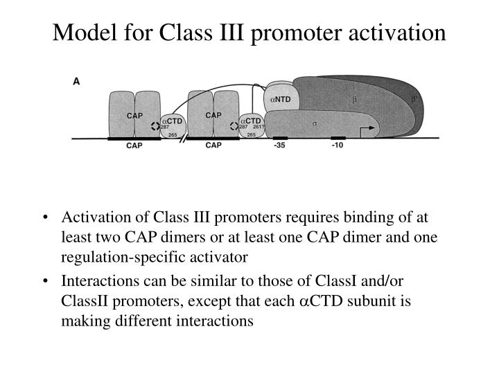 Model for Class III promoter activation