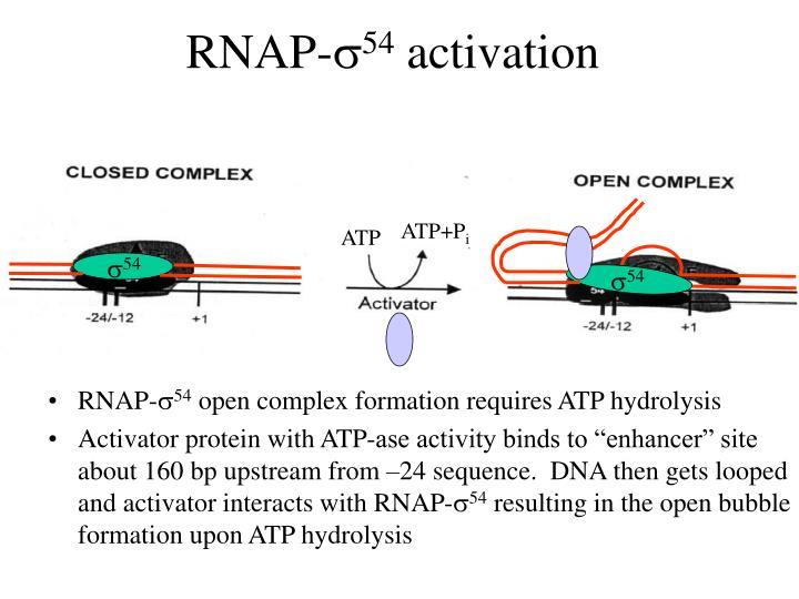 RNAP-