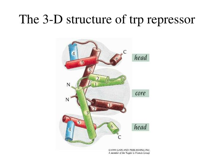 The 3-D structure of trp repressor