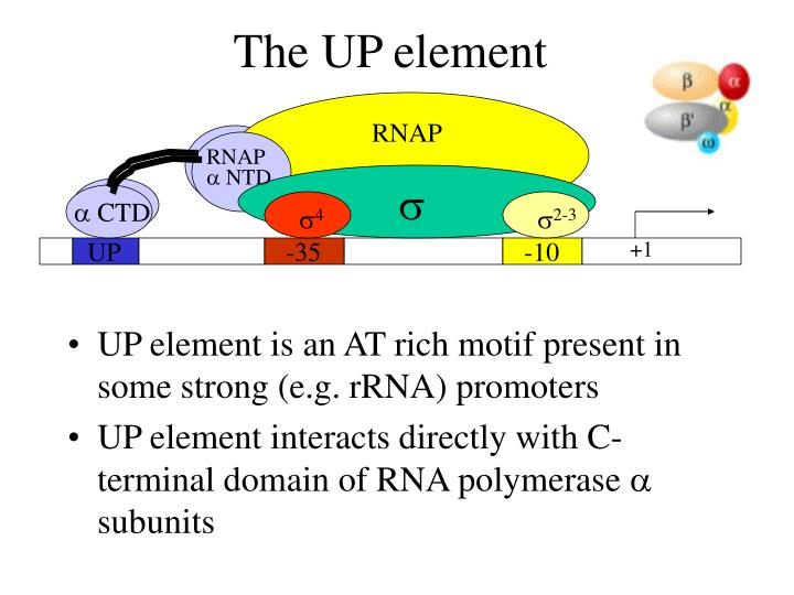 The UP element