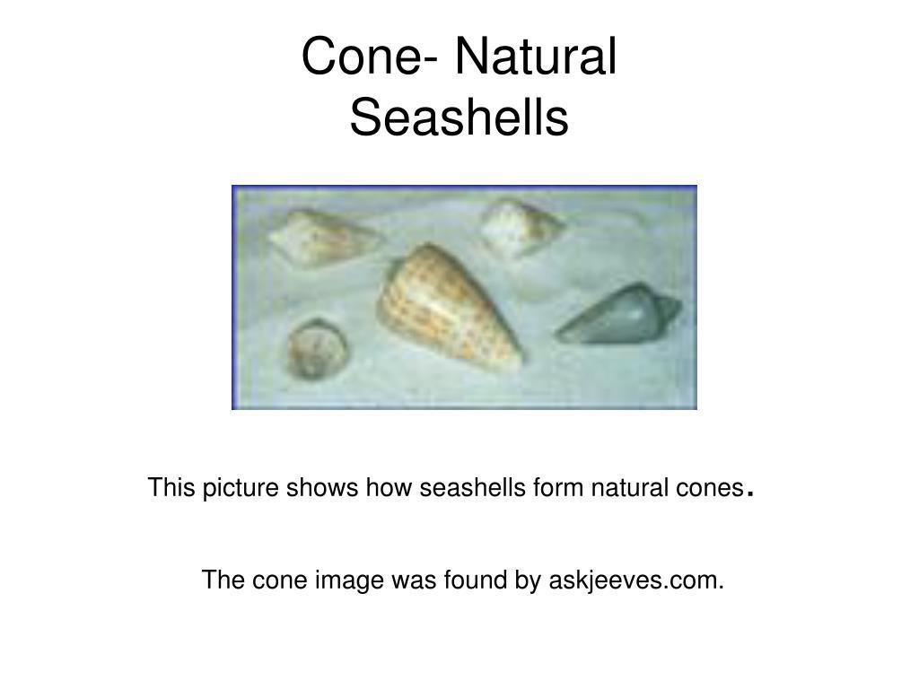 Cone- Natural