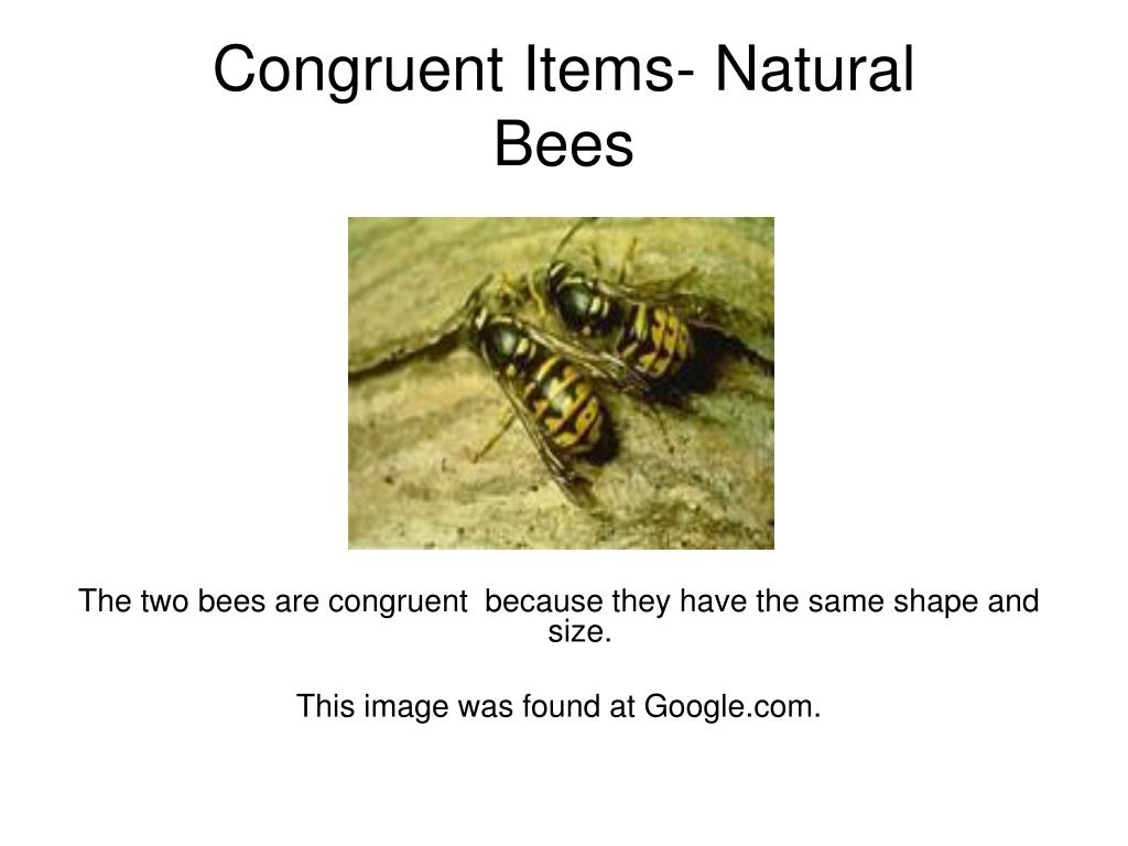 Congruent Items- Natural