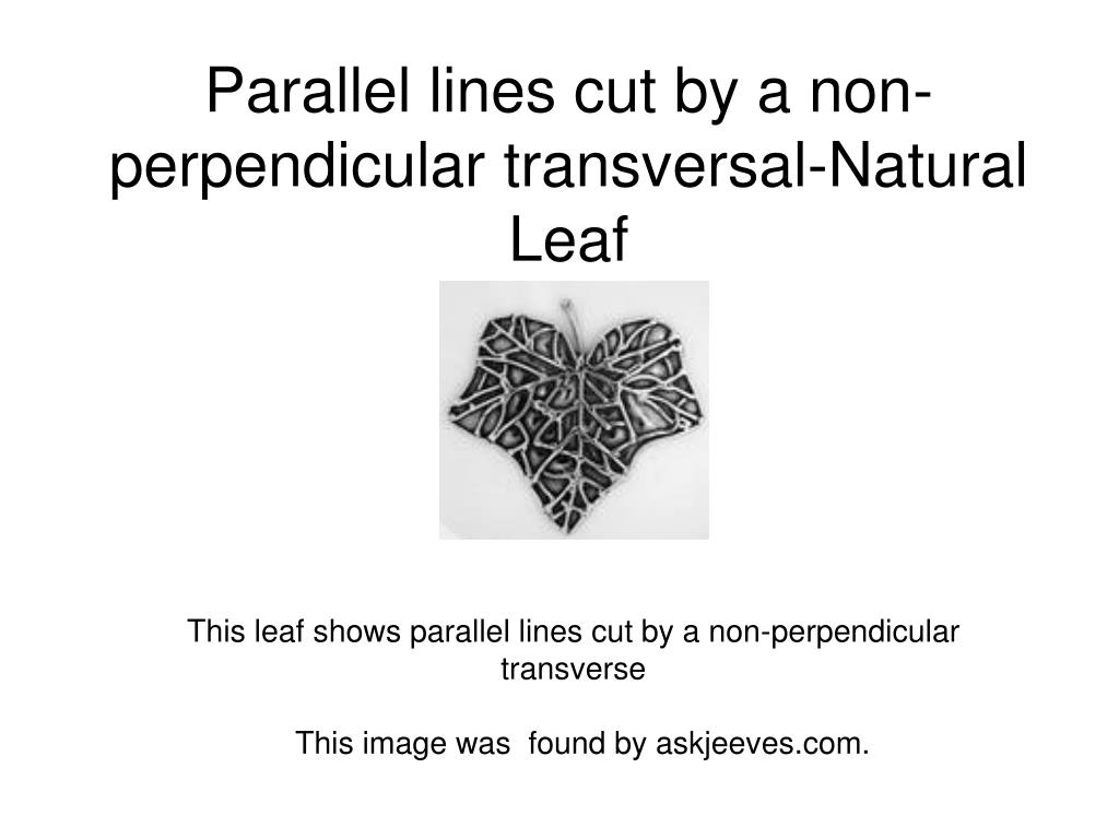Parallel lines cut by a non-perpendicular transversal-Natural Leaf