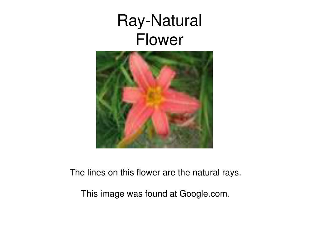 Ray-Natural