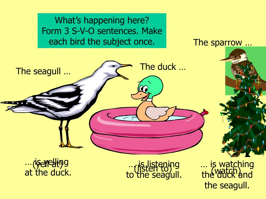 What's happening here?    Form 3 S-V-O sentences. Make each bird the subject once.