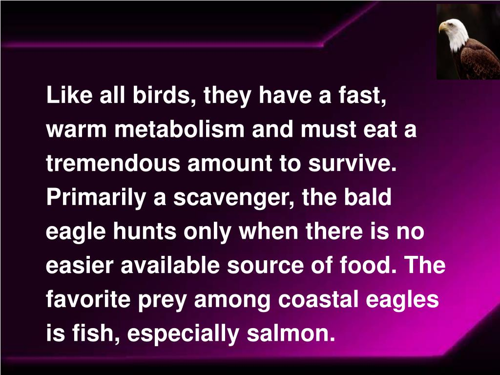 Like all birds, they have a fast, warm metabolism and must eat a tremendous amount to survive. Primarily a scavenger, the bald eagle hunts only when there is no easier available source of food. The favorite prey among coastal eagles is fish, especially salmon.