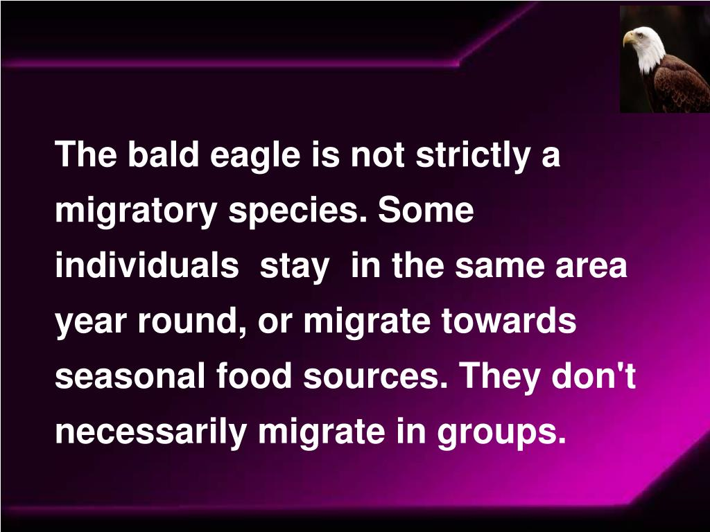 The bald eagle is not strictly a migratory species. Some individuals  stay  in the same area year round, or migrate towards seasonal food sources. They don't necessarily migrate in groups.