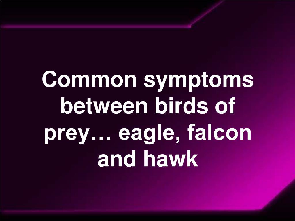 Common symptoms between birds of prey… eagle, falcon and hawk