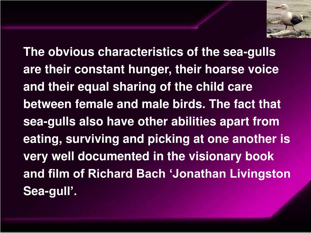 The obvious characteristics of the sea-gulls are their constant hunger, their hoarse voice and their equal sharing of the child care between female and male birds. The fact that sea-gulls also have other abilities apart from eating, surviving and picking at one another is very well documented in the visionary book and film of Richard Bach 'Jonathan Livingston Sea-gull'.
