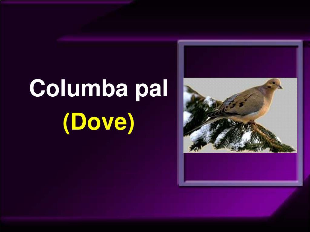 Columba pal