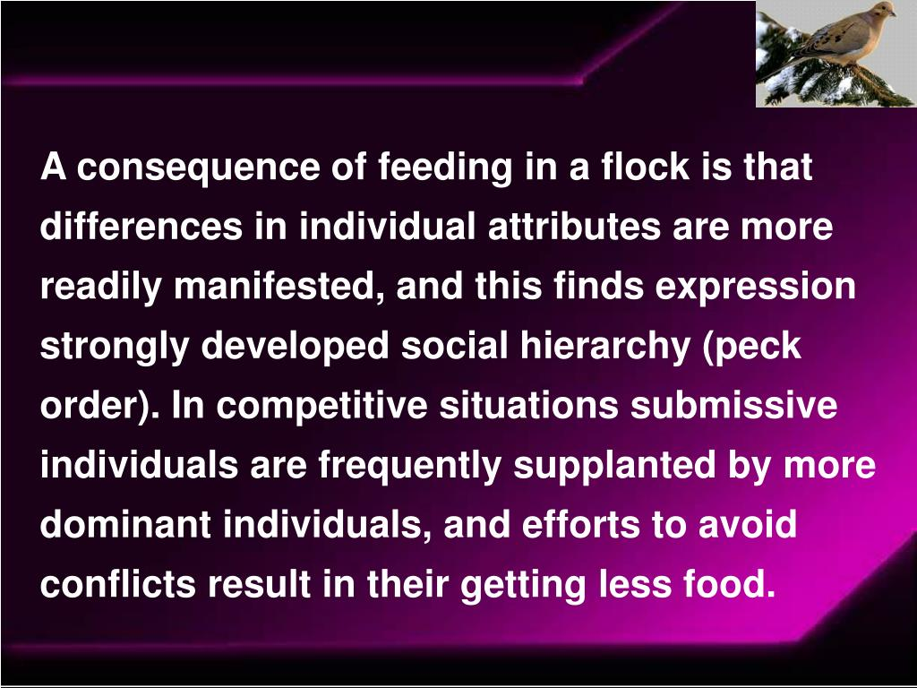 A consequence of feeding in a flock is that differences in individual attributes are more readily manifested, and this finds expression strongly developed social hierarchy (peck order). In competitive situations submissive individuals are frequently supplanted by more dominant individuals, and efforts to avoid conflicts result in their getting less food.