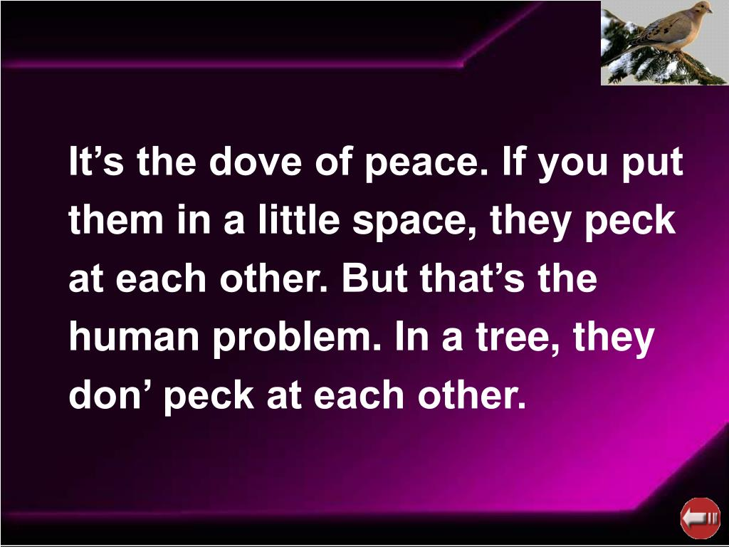 It's the dove of peace. If you put them in a little space, they peck at each other. But that's the human problem. In a tree, they don' peck at each other.