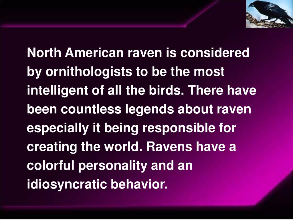 North American raven is considered by ornithologists to be the most intelligent of all the birds. There have been countless legends about raven especially it being responsible for creating the world. Ravens have a colorful personality and an idiosyncratic behavior.