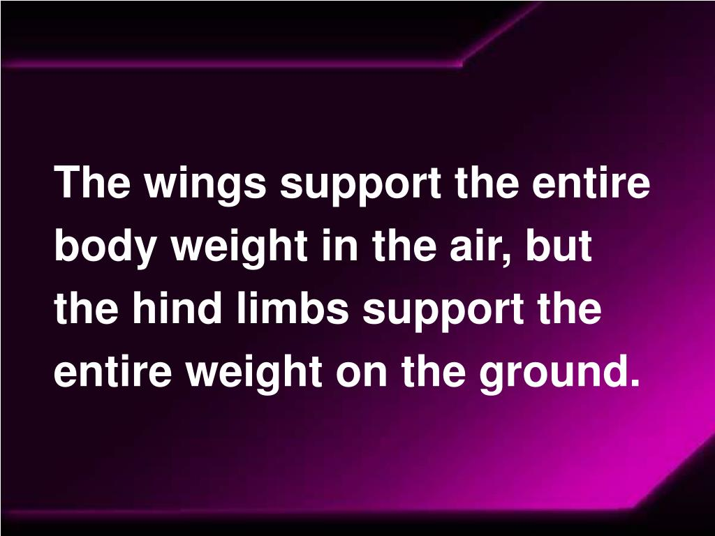 The wings support the entire body weight in the air, but the hind limbs support the entire weight on the ground.