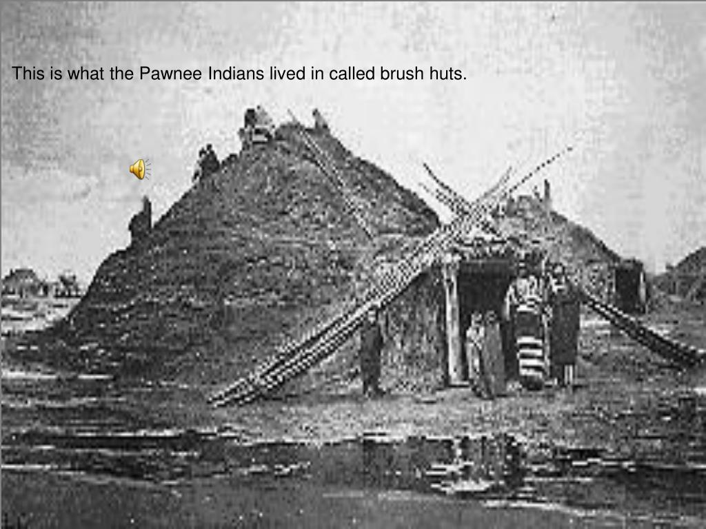 This is what the Pawnee Indians lived in called brush huts.