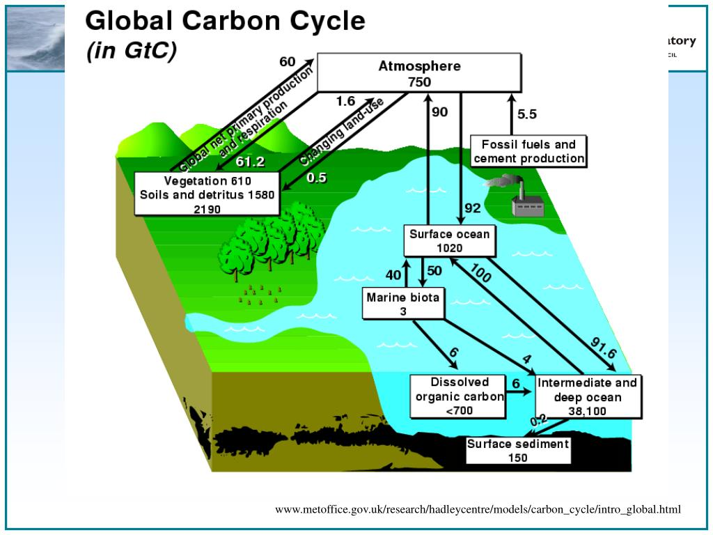 www.metoffice.gov.uk/research/hadleycentre/models/carbon_cycle/intro_global.html