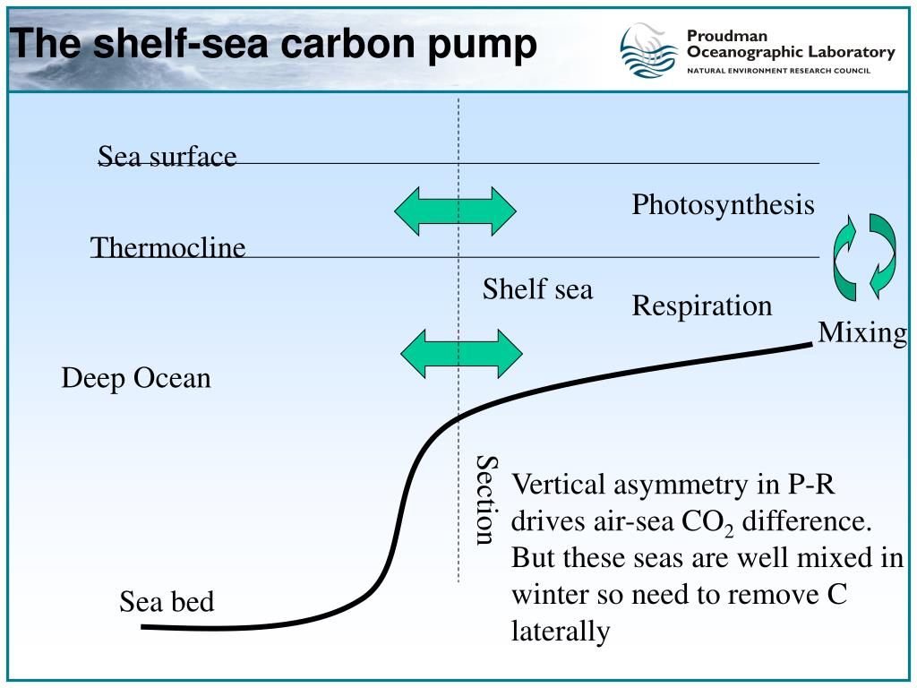 The shelf-sea carbon pump
