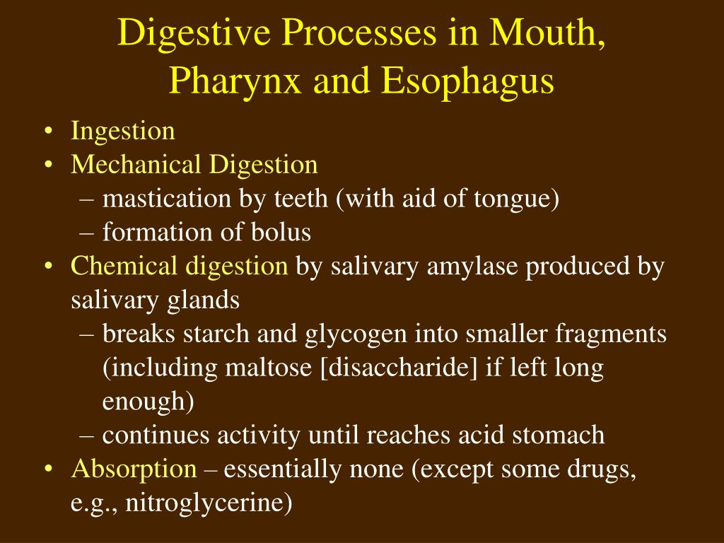 Digestive Processes in Mouth,